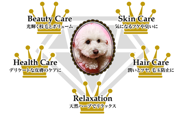 ハーブパックの 5つのメリット!!Beauty Care : Skin Care : Health Care : Hair Care : Relaxation